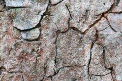 Bark surface texture wood Royalty Free Stock Images