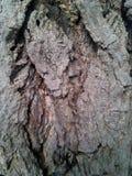 The bark Stock Photo