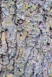 Bark taken near. Colorful in color royalty free stock images