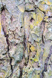 Bark taken near. Colorful in color royalty free stock image
