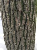 Bark texture Royalty Free Stock Images