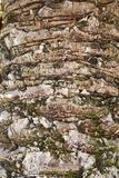 Bark texture Stock Photography