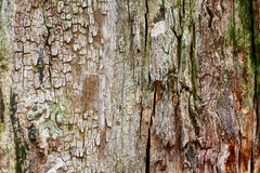 BARK TEXTURE Stock Images
