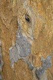 Bark Texture. Natural Bark of Tree Background Stock Photo