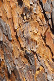 Bark texture Royalty Free Stock Photography