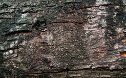 Bark texture. Texture of old bark of tree Stock Photo