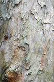 Bark texture Stock Photography