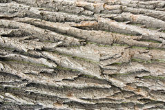 Bark texture Stock Image