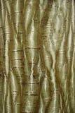 Bark texture Stock Photos