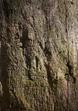 Bark Texture Stock Photos