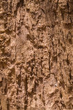 Bark Texture. Close up of bark of an Indian tree Royalty Free Stock Photo