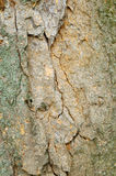 Bark Texture Background Royalty Free Stock Photography