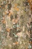 Bark Texture Background Stock Images