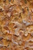Bark Texture Background Royalty Free Stock Image