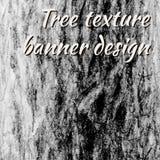 Bark texture background Stock Photos