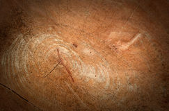 Bark texture background. Pattern crack old brown for design stock photo