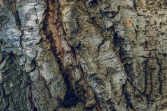 Bark texture background pattern crack old brown for design.  Stock Photos