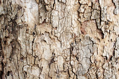Bark texture close up as a background Stock Photography