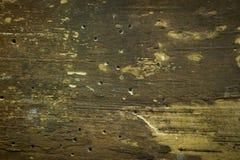 Bark texture royalty free stock image