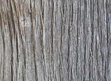 Bark texture of Himalayan tree. Royalty Free Stock Photos