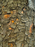 Bark Texture. Lichens Dark Bark Texture detail macro close up Stock Images