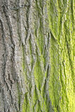 Bark texture with moss Royalty Free Stock Photography