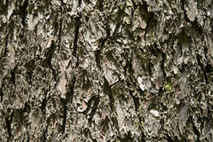 Bark texture. Stock Photos