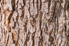 Bark texture, skin of wood texture background Stock Images