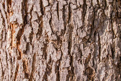 Bark texture, skin of wood texture background Stock Image