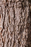 Bark texture, skin of wood texture background Royalty Free Stock Photos