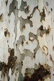 Bark Texture Royalty Free Stock Photos
