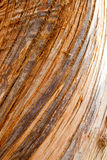 Bark Texture. Tree bark wood texture closeup with cracks and red skin wood color tone stock images