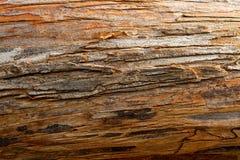 Bark Texture Stock Image