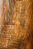 Bark Texture. Tree bark wood texture closeup with cracks and red skin wood color tone stock photos