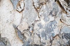 Bark texture wallpaper Royalty Free Stock Images