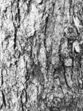 Bark High contrast. Bark texture wayside road thailand High contrast royalty free stock photography