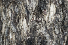 Bark texture Royalty Free Stock Image
