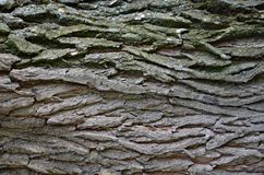 Bark texture of wood Stock Image