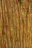 Bark Royalty Free Stock Images