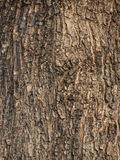Bark textured. Idea for background and wallpaper purposes Stock Photo