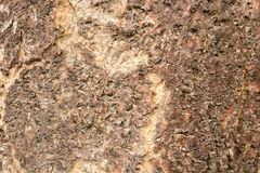 Bark, textures, backgrounds, rugged, shell, scene. Royalty Free Stock Photo