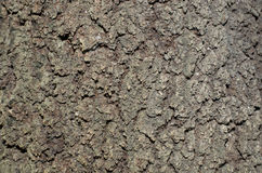 Bark textures Royalty Free Stock Photos