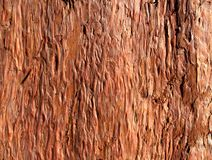 The bark of the tree. The bark of the tree -beautiful, unusual background Stock Photo