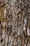 The bark of the tree. Royalty Free Stock Image