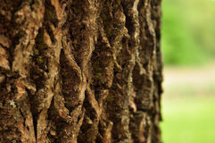 Bark of a tree Royalty Free Stock Photography