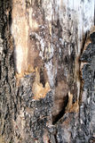 Bark of tree. Close up of tree bark Stock Photo