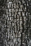 Bark on Tree. Details of Bark on Tree royalty free stock images