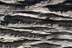 The bark of the tree. Stock Photos