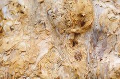 Bark of tree. The macro of tree bark stock image