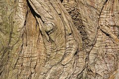 Bark of a tree Stock Photography